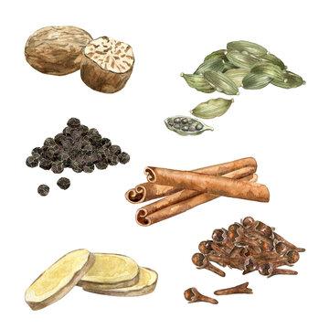 Watercolor ingredient for masala tea. Aromatic spice for indian chai recipe. Nutmeg, black pepper, ginger, cloves, cinnamon, cardamon on white.