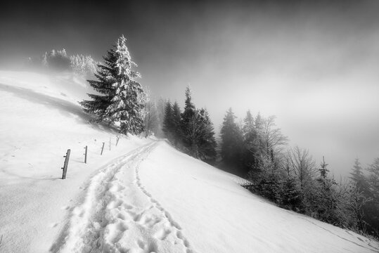 Fog in the winter forest. A path in snow drifts. A tree in snow clothes. Switzerland. Black and white.