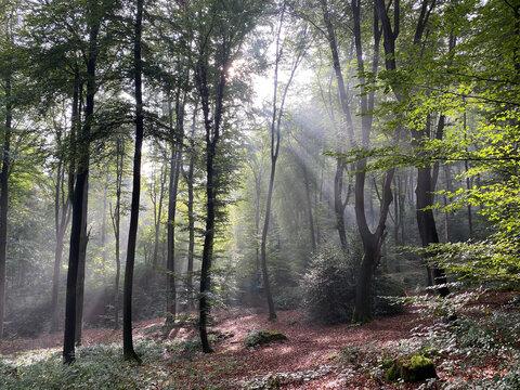 Waldlichtung am Morgen mit Sonnenstrahlen