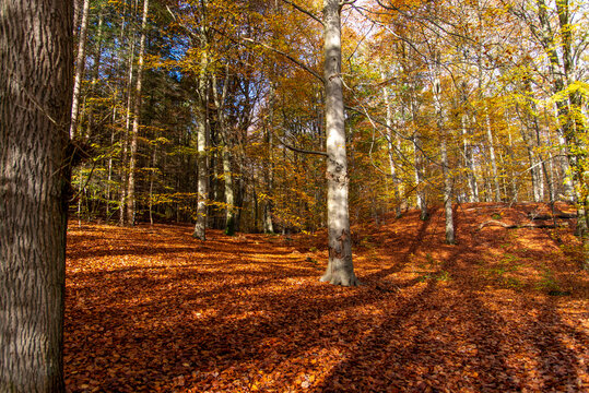 colorful autumn in the forest