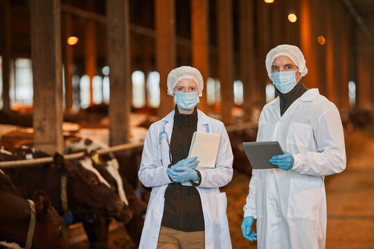 Waist up portrait of two veterinarians wearing masks at farm and looking at camera while holding tablets, copy space