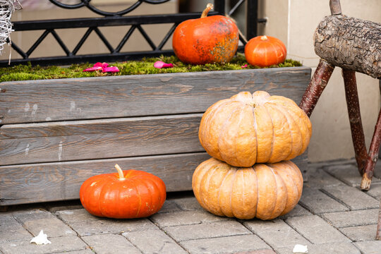 Large urn filled with pumpkins outside on the steps leading to the front door. Seasonal display for Halloween, Thanksgiving, fall and autumn.