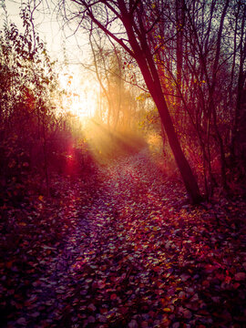 First rays of sunshine on a forest aisle in autumn