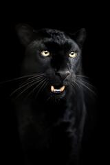 Portrait of black Leopard