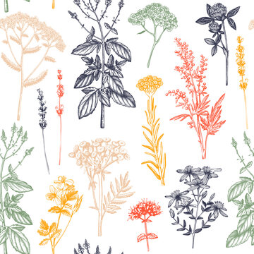 Botanical background with hand drawn spices and herbs. Decorative colorful backdrop with vintage medicinal plants sketches. Herbal seamless pattern.