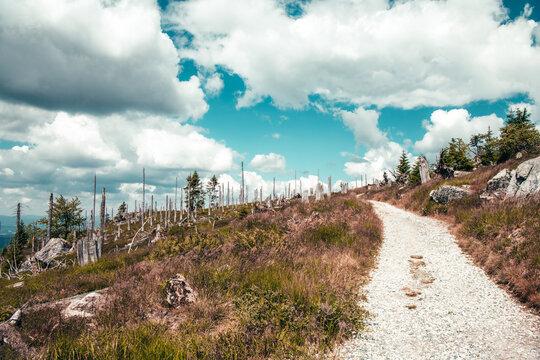 Rund um den Rachel im bayerischen Wald