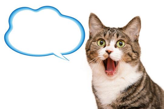 口を大きく開けた猫