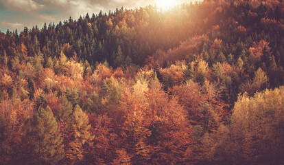 Wall Mural - Scenic and Colorful Fall Foliage Background