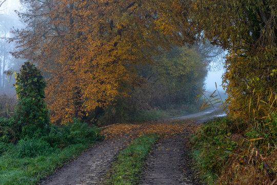 Waldweg an einem nebligen Herbstmorgen bei Schrobenhausen