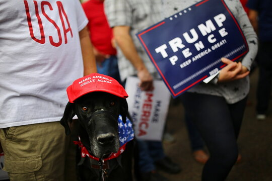 A dog wearing a Make America Great Again (MAGA) hat is pictured during a campaign rally from Donald Trump Jr for U.S. President Donald Trump ahead of Election Day in Scottsdale, Arizona