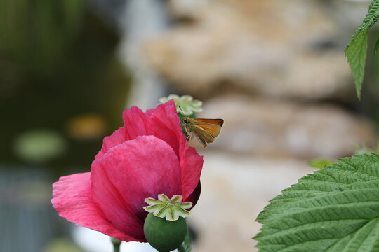 Closeup shot of a butterfly on a rose