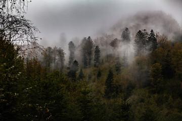 Bieszczadzki las we mgle, Polska