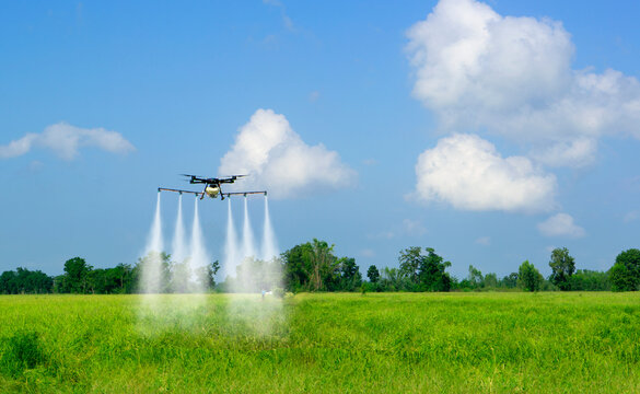 Agricultural drones fly to sprayed Herbicide in rice fields