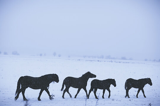 abstract blurred winter background, horses in a snowy field landscape, snow on a farm