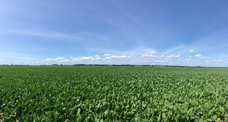 Farmland panorama around Rheezerveen