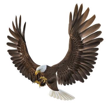Seeadler, Freisteller