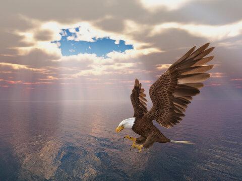 Seeadler über dem Meer