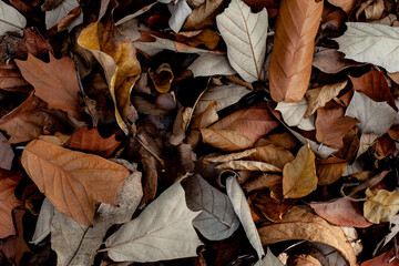 Wall Mural - abstract brown leaf background. Flat lay, fresh wallpaper banner concept