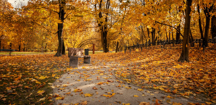 Panorama of autumn city park full of orange leaves