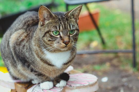 Beautiful tabby cat perching on a stool