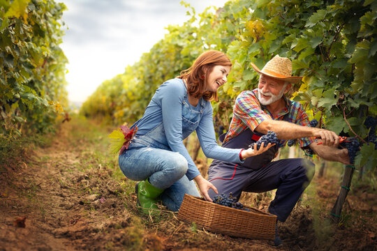 Smiling winegrower couple working together