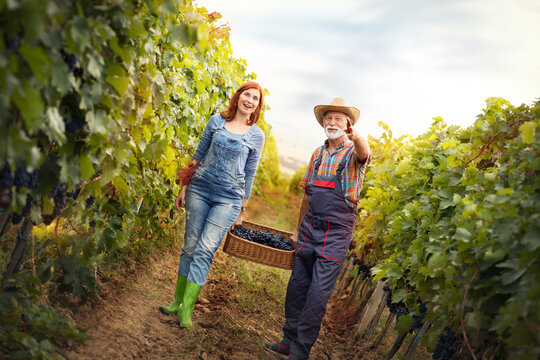 Cheerful senior man with young woman carrying baskets full of grapes