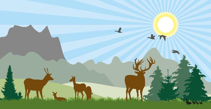 Hirsche auf Wiese Sommer