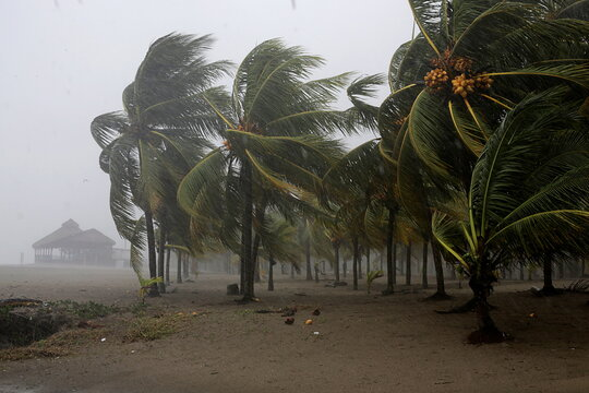 Palm trees sway in the wind as Hurricane Eta approaches, in Tela