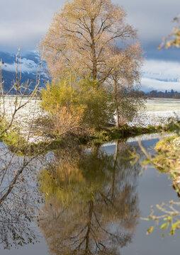 Herbstliche spiegelung im Bach.