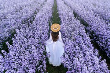 Wall Mural - Beautiful girl in white dress walking in Margaret flowers fields, Chiang mai in Thailand.