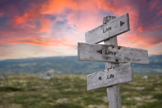 live love life text engraved in wooden signpost outdoors in nature during sunset and pink skies.
