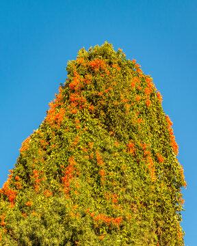 Unusual Tree Over Blue SKy