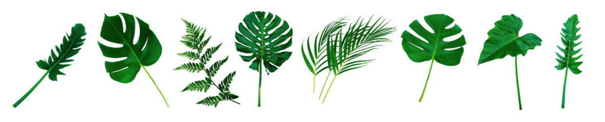 More beautiful exotic tropical leaves, isolated leaf background,clipping path.