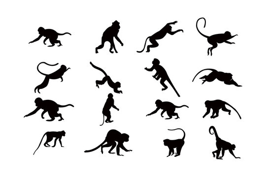 monkey silhouette icon vector set for logo