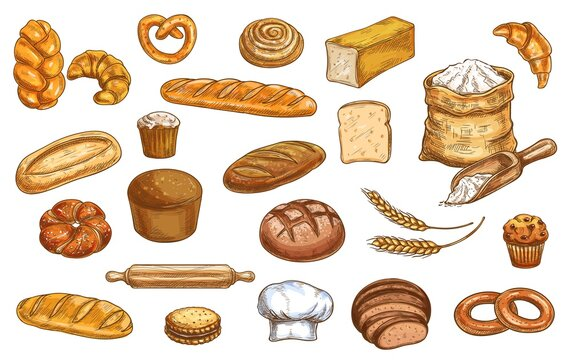Bread, bakery sketch and pastry, baked food vector icons. Bakery bread baguette, croissant and wheat grain patisserie, rye loaf, bagel and pita, toast bun, cake or cupcake and ciabatta bread in sketch