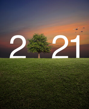 2021 with tree on green grass field over sunset sky with birds, Happy new year 2021 ecological cover concept