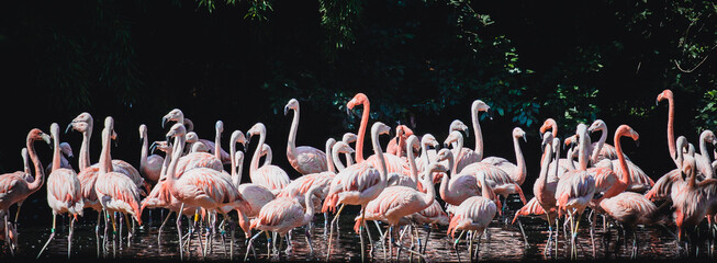 The group of flamingo
