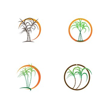 Sugarcane logo and symbol vector image