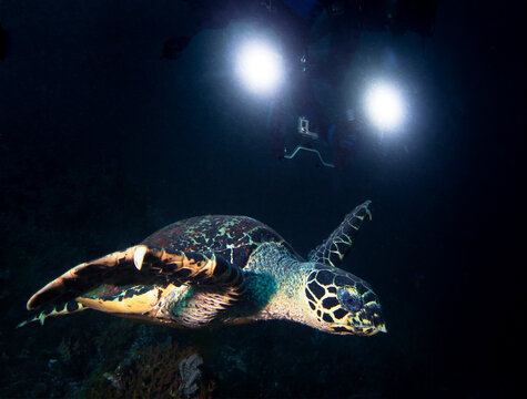 Turtle and underwater camera with lights.
