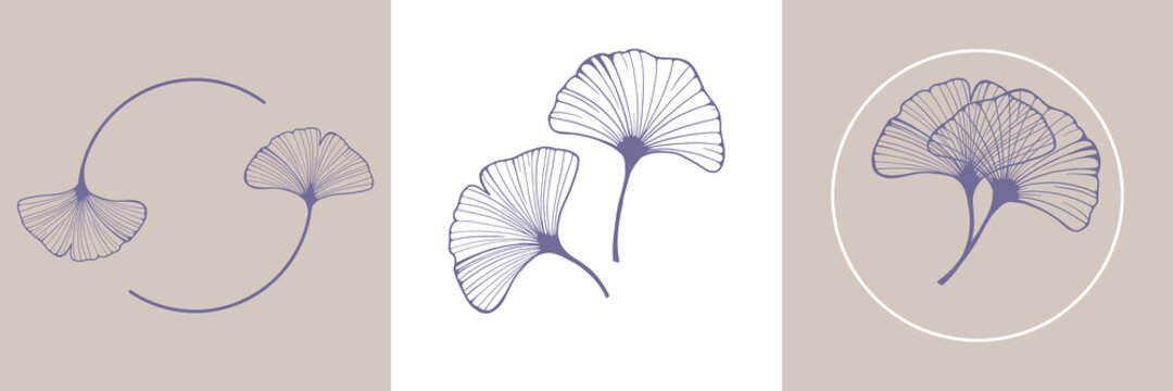 Ginkgo biloba leaves. Hand drawing elements for logo wedding cards, cosmetics, tattoo, spa, jewelry, yoga design. Vector illustration in a minimal linear style.