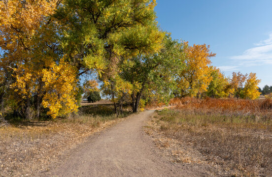 Big Colorful Fall Trees Along Winding Dirt Path