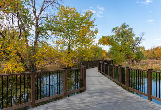 Wooden Plank Footbridge Across Pond with Colorful Fall Trees