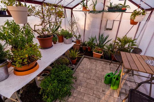 Gewächshaus zum Überwintern von Pflanzen und Kübelpflanzen Frostschutz und Kakteen