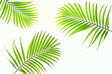 Wall Mural - leaves of palm isolated on white background for design elements, tropical leaf, summer background