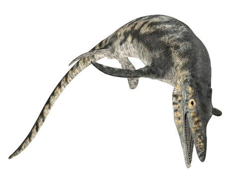 Mosasaurier Tylosaurus, Freisteller