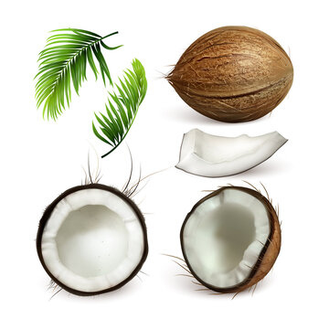 Coconut Tropical Tree Nut And Branch Set Vector. Collection Of Different Part Of Coconut, Sliced Cut Piece And Green Leaves Exotical Palm. Coco Plant Template Realistic 3d Illustrations