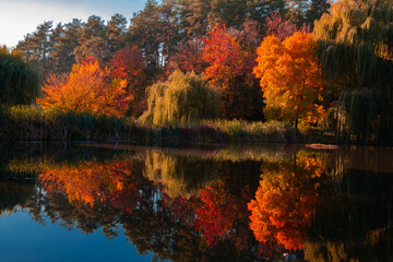 Trees are reflected in the water.