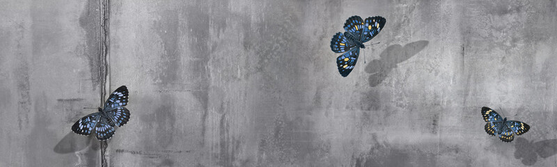 Beautiful blue and yellow butterflies at concrete wall background. Free space for text. Banner format.