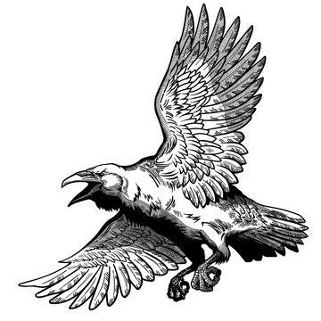 A raven in flight. Flying large bird. Hand drawn crow. Graphic style vector illustration
