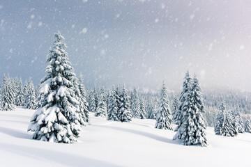 Fantastic winter landscape with snowy trees. Carpathian mountains, Ukraine, Europe. Christmas holiday background. Landscape photography